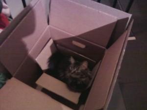 juminboxinboxinbox